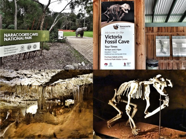 Naracoorte Caves National park South Australia